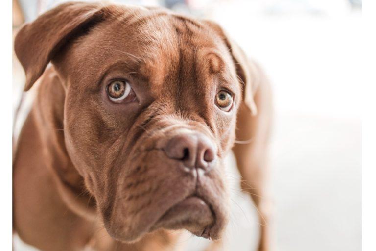 Seguro de Responsabilidad civil Animales de Compañía y Vigilancia